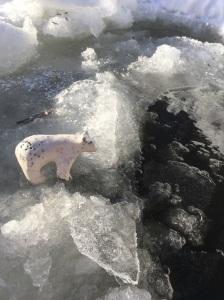 raku-kermodie-bear-ice-fishing
