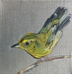 WILSON'S WARBLER by Laura McGregor