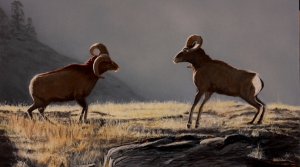 Big Horn Sheep by Kain Shannon
