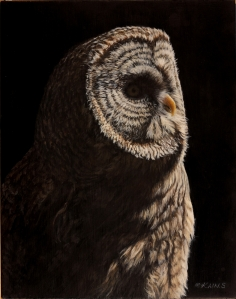 Owl by Kain Shannon