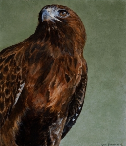 Red Tailed Hawk by Kain Shannon