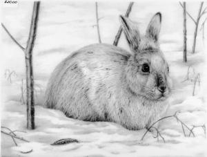 Arctic Hare by Katerina Mayenfels