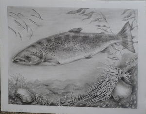 Atlantic Salmon by Katerina Mayenfels