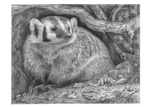 Badger by Katerina Mayenfels