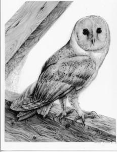 Barn Owl by Katerina Mayenfels