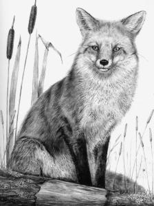 Fox by Katerina Mayenfels