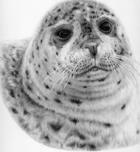 Harbour Seal by Katerina Mayenfels