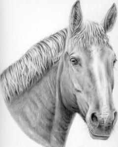 Horse by Katerina Mayenfels