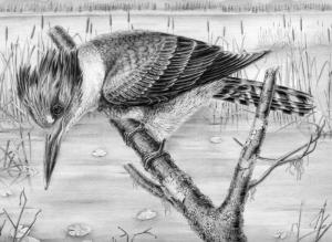 Kingfisher by Katerina Mayenfelsj