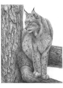 Lynx on Tree by Katerina Mayenfels