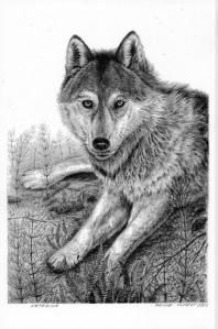 Reclining Wolf by Katerina Mayenfels